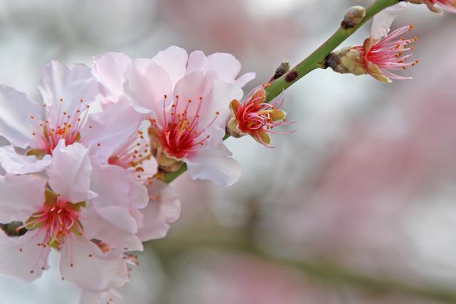 """带春字的成语,原来这些和""""春""""有关的成语,都从诗词中来"""