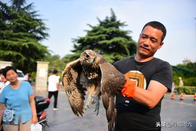 河南中牟县农作地域不宜它存活,提议野生动植物维护站先开展救护