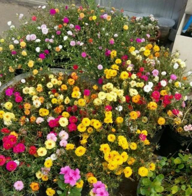 秋天开的花有哪些,这13种漂亮的花,到了秋天结种子,记得采摘一些,留着明年种