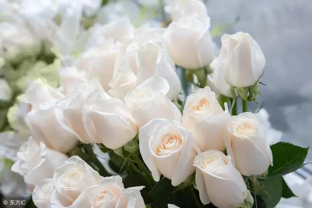 珍惜彼此感情的句子,有一种真情,叫彼此珍惜,既相遇,莫相忘。再无来世,珍惜今生!