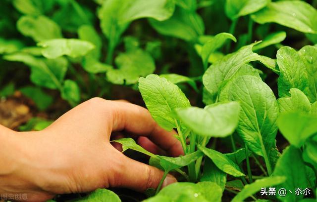 投资两万的小型加工厂,办一个小型的有机肥加工厂需要哪些手续,投资多少钱呢?