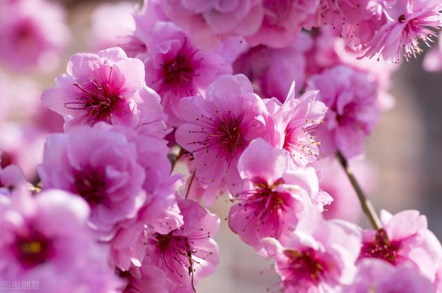 花卉名称,赏花不知花名有点遗憾,这次来认识花名(一)