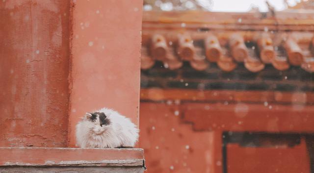 """描写冬天的诗句,""""千峰笋石,万树梨花。""""细数漫天雪花,品味诗词里的雪景"""