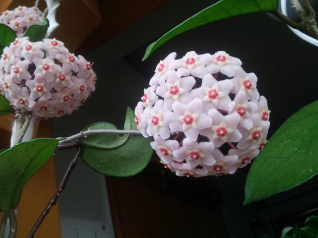 的花卉,这3种花超省心,花期开得长,你喜欢吗?