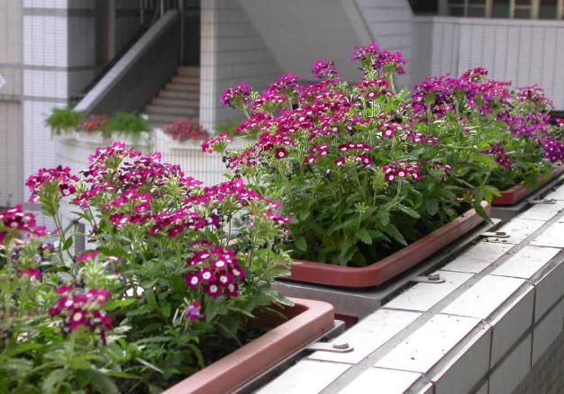 花卉种子,有3种花,容易播种发芽率很高,不用买苗了,经常能开花