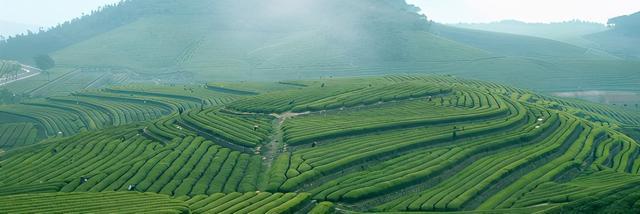 绿茶有哪些品种,这是你了解的中国六大茶吗?