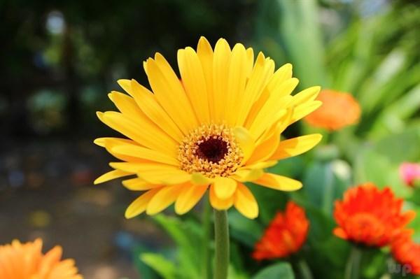 早上发朋友圈的句子,早安发朋友圈的精美句子,心向阳光,温暖四溢