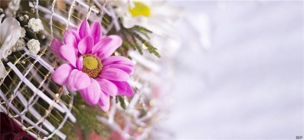 早上发朋友圈的句子,早晨适合发朋友圈的句子,元气满满,愿你心向阳光