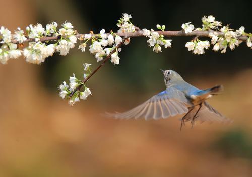 今天心情美美的句子,美醉了!春回大地,万物萌动,鸟语花香给你一天好心情