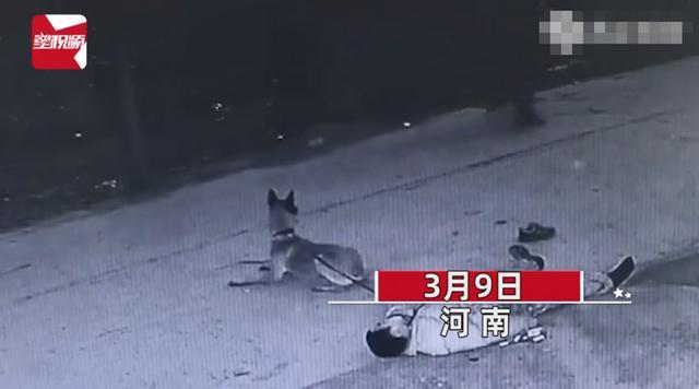 主人醉倒路边宠物狗忠心死守身旁!连声吼叫求救 路人却反被吓跑 全球新闻风头榜 第1张