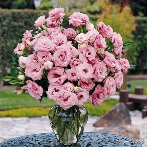 一年生花卉,5种一次性花,好看好养开不久,年年开花年年养