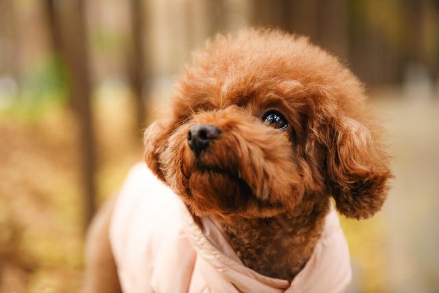 宠物狗品种,最适合家养的5种狗狗,听话又好养,你养对了吗