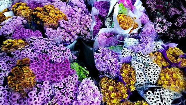 云南花卉市场,永不凋零的花卉之都!占地千亩,亚洲最大,寒冬腊月鲜花芬芳