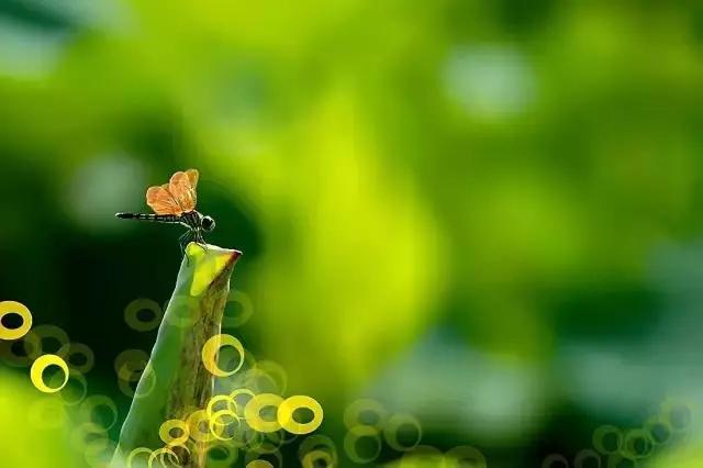 碧水东流至此回的上一句,诗词:读李白,品青莲之风