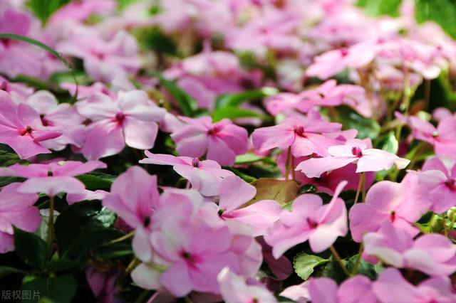 的花卉,分享高性价比的8种花草,拍照给你看,现在它们撑起了院子的颜值