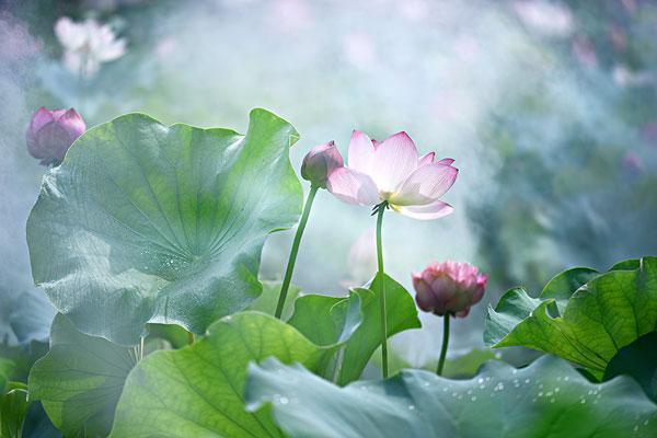 佛说人生感悟的句子,充满智慧,让你感悟人生的佛理禅语:看淡世事沧桑,内心安然无恙