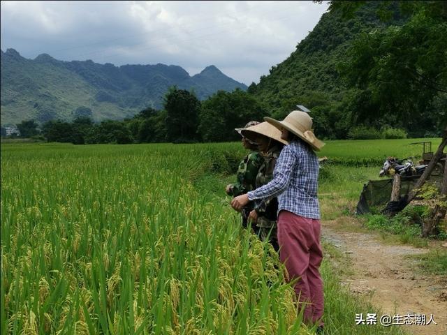 农村养殖,回农村创业搞什么养殖低风险?