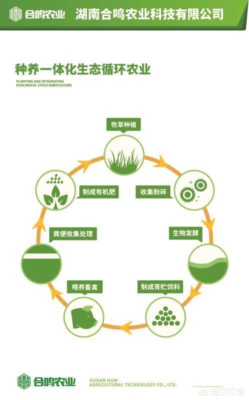 在南方的农村,想做大自然生态养殖业,该怎么着手?鸡的破坏力有多强?山林地放养土鸡,为何鸡活动的地方光秃秃的?(图3)