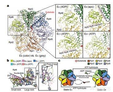 如何看待北京大学近期蛋白质机器动力学取得的