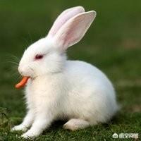 为什么有些冬天圈养的兔子会经常死亡?