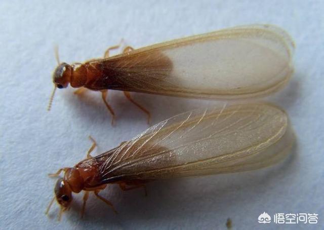 哪些工程需要做白蚁防治?