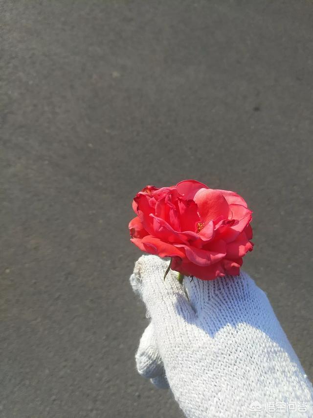 2月14情人节礼物,情人节送什么礼物给女性朋友好(2月14日情人节送老婆什么礼物好?)