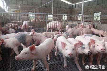 受非洲猪瘟影响,你觉得2019年生猪市场会如何?