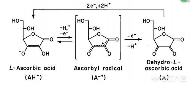 什么叫抗氧化(什么叫抗氧化作用是什么)