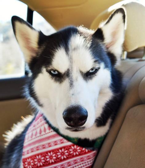 什么宠物狗好养,不掉毛,每个月花费少,好照顾,可爱的,没啥味道的?天策(大唐)带什么孩子好?