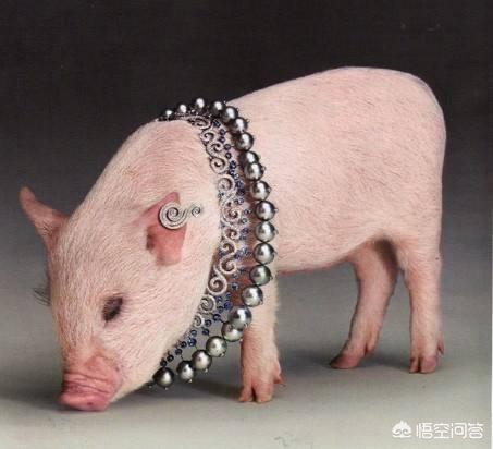 哪些牌子的哪些猪年限定值得买?