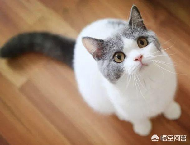 """为什么有的男人对""""猫""""一样的女人,无法抗拒?"""