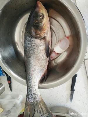 水煮花鲢鱼,花鲢怎么做好吃?