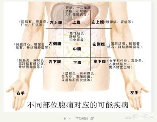 腹部是哪个位置图片,怎样区分清楚胃痛还是胆痛呢?