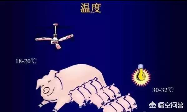 存栏猪怎么喂长得快,存栏猪的圈养方法?农村适合养殖哪些动物?你怎么看?(图5)