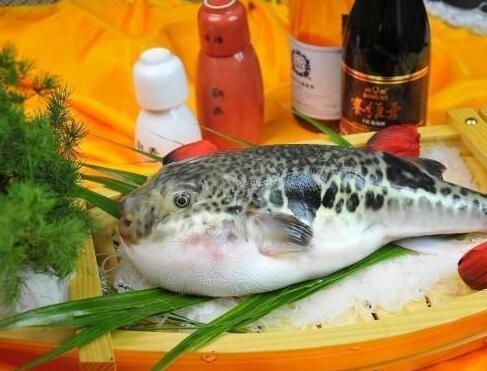 鳌鱼图片,你们吃过最好吃的鱼是哪种?