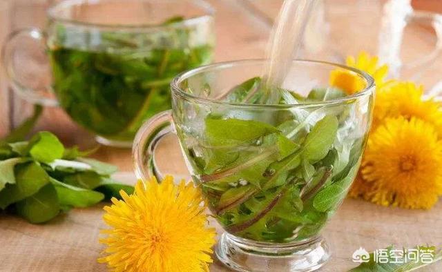 金莲花茶(金莲花茶可以每天喝吗)
