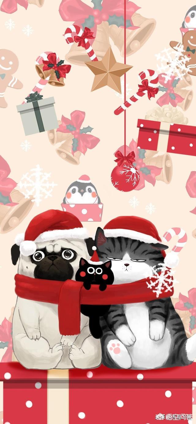 情人节礼物大全,情人节浪漫的点子(情人节就要到了,你送过哪些浪漫的礼物?)