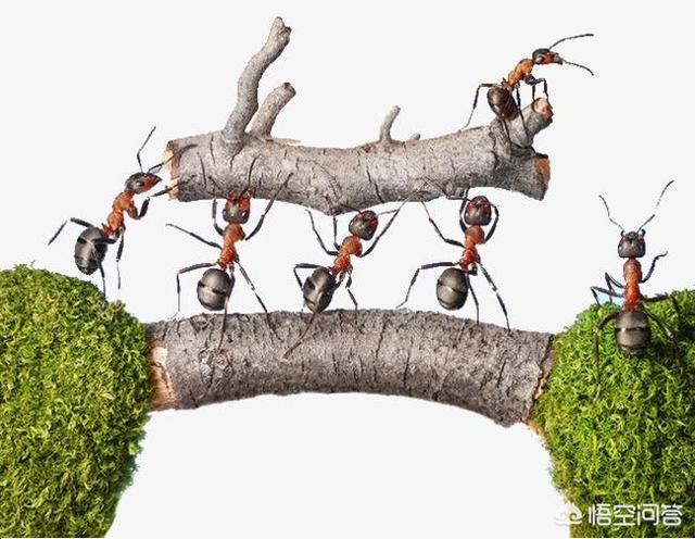 家里有蚂蚁,屋子里有很多蚂蚁,该怎么消灭?