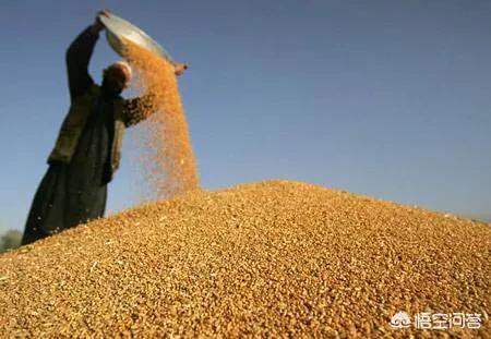 2019年3月份小麦价格是涨还是跌?