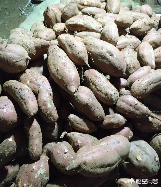 淀粉型甘薯有哪些优良的品种?