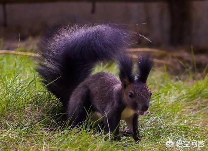 有什么好养的超小型宠物?养宠物会给生活带来哪些改变?