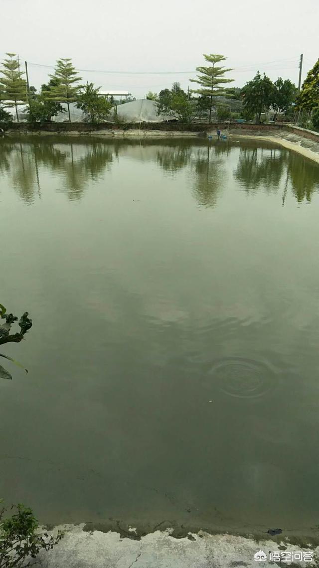 孢子虫、轮轴虫、权杖虫,畜牧养殖虫害多,秋季怎样防控病菌?天气情况失温鱼塘比较浅,对鱼有没有影响?