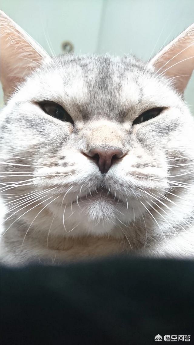 """从""""猫爪杯""""爆火探寻""""猫""""如何逐渐成为一种文化符号?"""