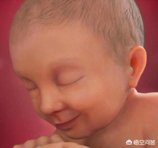 怀孕13周胎儿图片欣赏,胎儿1-40周的发育过程如何?