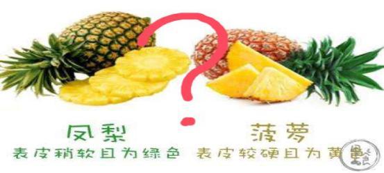 菠萝图片大全大图,菠萝和凤梨到底是什么关系?