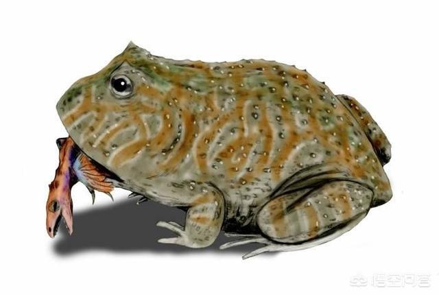 生活在7000万年前的魔鬼蛙,真的会吃恐龙吗?