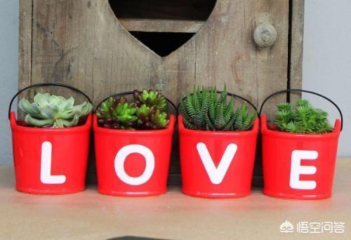 哪些废弃之物可以利用改造成为家庭园艺的盆栽容器?
