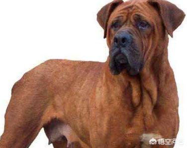 日本都有什么品种的狗狗?