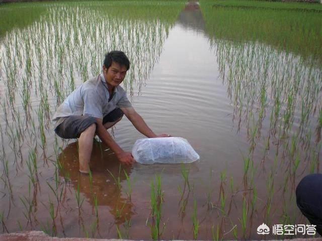"""""""中国最大淡水鱼""""灭绝,这是什么鱼?还有哪些鱼濒临灭绝?"""