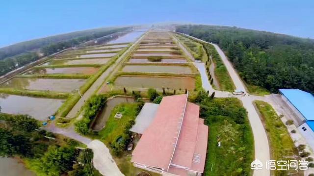 你认为明年小龙虾养殖面积还会大幅度增强吗?